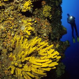 Half Day Diving Trogir